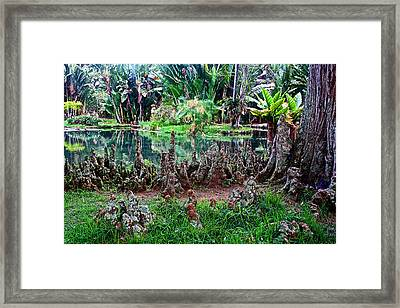 Cypress Knees In Botanical Garden Of Rio De Janeiro-brazil  Framed Print by Ruth Hager