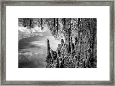Cypress Knees In Bw Framed Print by James Barber
