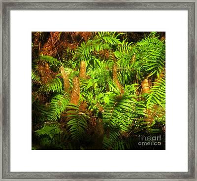 Cypress Knees In Ferns Framed Print by David Lee Thompson