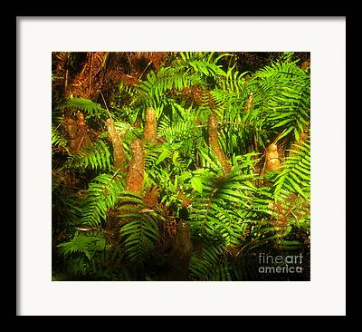 Bird Rookery Swamp Framed Prints