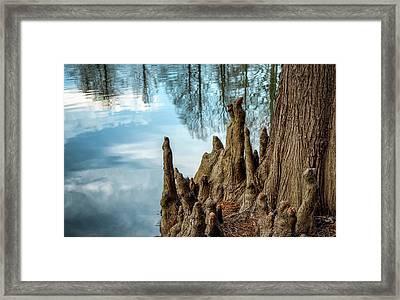 Cypress Knees Framed Print by James Barber