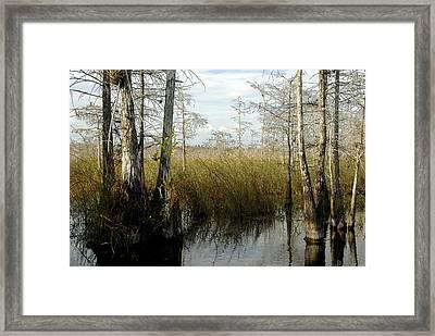 Cypress Landscape Framed Print by David Lee Thompson