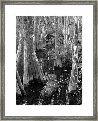 Cypress Pond Framed Print by Juergen Roth
