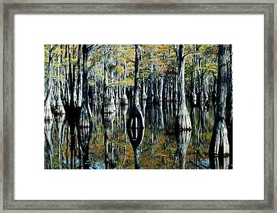 Cypress Reflections Framed Print