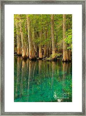 Cypress Reflections In Blue Framed Print by Adam Jewell