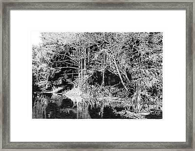 Cypress Roots II Framed Print