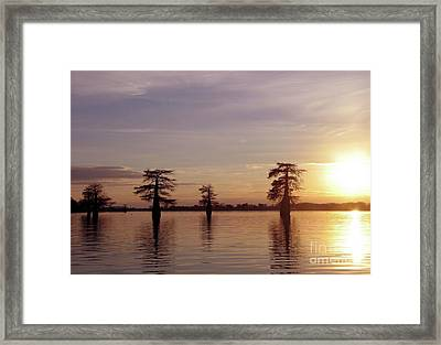 Cypress Sunset Framed Print by Sheila Ping