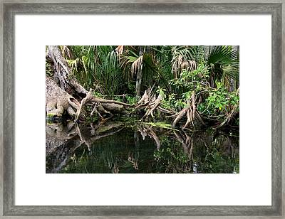 Framed Print featuring the photograph Cypress Swamp  by Barbara Bowen
