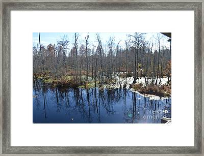 Cypress Swamp Framed Print by Gordon Mooneyhan