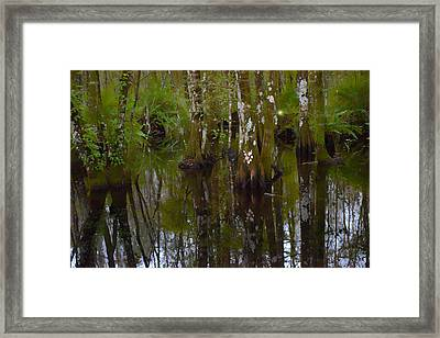 Cypress Swamp Framed Print by Jeffrey Hamilton