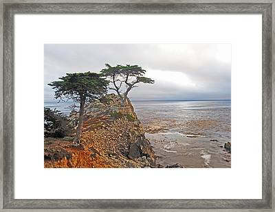 Cypress Tree At Pebble Beach Framed Print