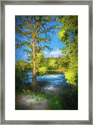 Cypress Tree By The River Framed Print