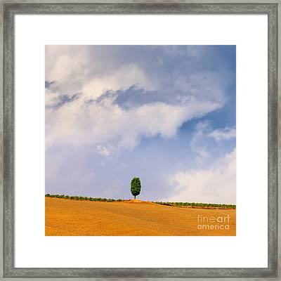 Cypress Tree In Le Crete Senesi In The Tuscany, Italy Framed Print