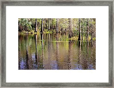 Cypress Trees Along The Hillsborough River Framed Print by Carol Groenen