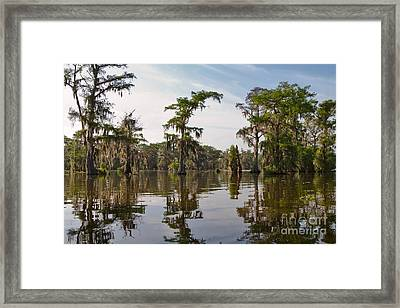 Cypress Trees And Spanish Moss In Lake Martin Framed Print