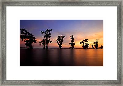 Cypress Trees Framed Print by Evgeny Vasenev