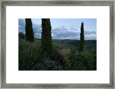 Cypress Trees Growing In The Rolling Framed Print by Todd Gipstein