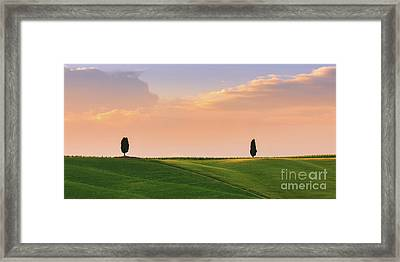 Cypress Trees At Sunset Framed Print