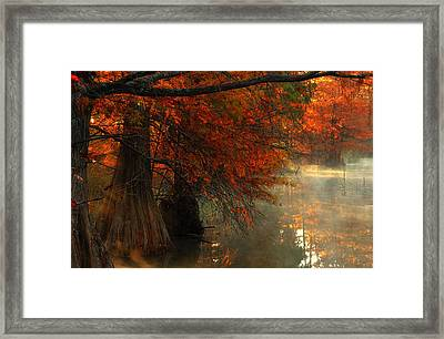 Cypress Trees In Red Framed Print by Iris Greenwell