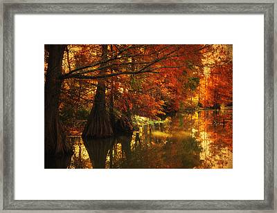 Cypress Trees In The Misy Morning Framed Print by Iris Greenwell