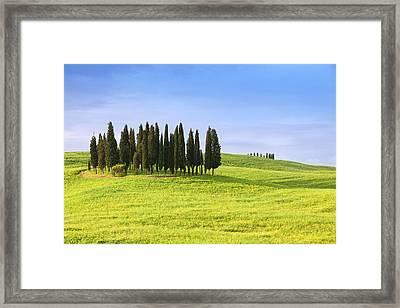 cypress trees in Tuscany Italy Framed Print