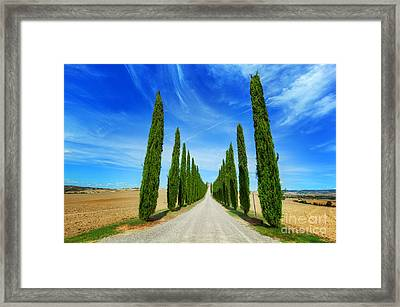 Cypress Trees Road In Tuscany, Italy Framed Print by Michal Bednarek