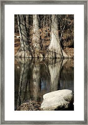 Cypress Trunks Framed Print