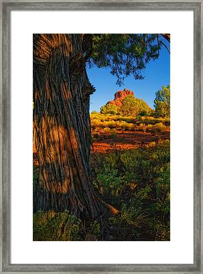 Cypress With Bell Rock Framed Print