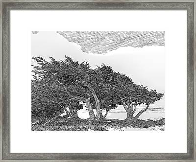 Cypresses Framed Print