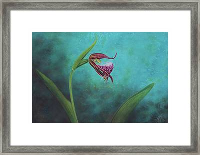 Cypripedium Arietinum V Framed Print