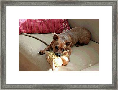 Cyrus The Great Framed Print by Suzanne Gaff