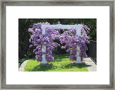 D6b6373 Wisteria In Bloom Framed Print