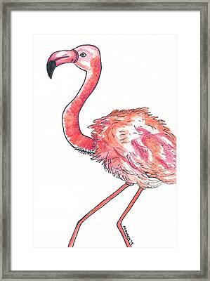 Da Flamingo Framed Print