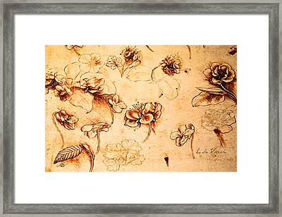 Da Vinci Flower Study Gold By Da Vinci Framed Print
