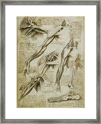 Da Vinci Man Right Arm And Shoulder Anatomy By Da Vinci Framed Print