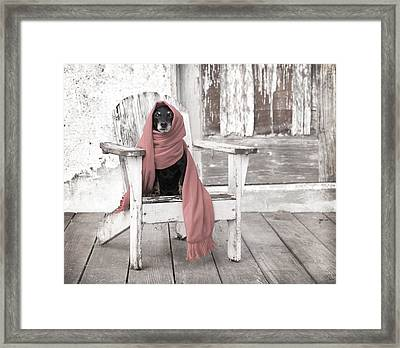 Dachshund  Dog Wearing Scarf Sitting On Adirondack Chair Framed Print