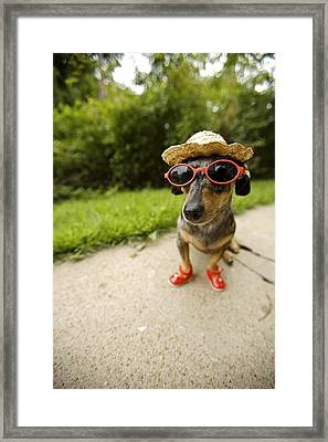 Dachshund In Sunglasses, Straw Hat Framed Print