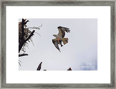Dad Brought Supper Framed Print