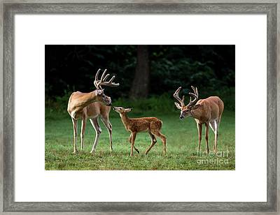 Daddy Day Care Framed Print