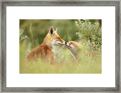 Daddy's Girl - Red Fox Father And Its Young Fox Kit Framed Print by Roeselien Raimond