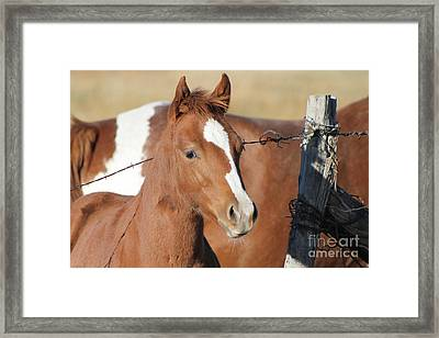 Daddys Home Framed Print