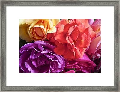 Dad's Roses Framed Print by Gwyn Newcombe