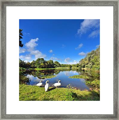 Dafen Pond Framed Print