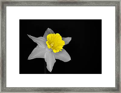 Daffo The Dilly Isolation Framed Print