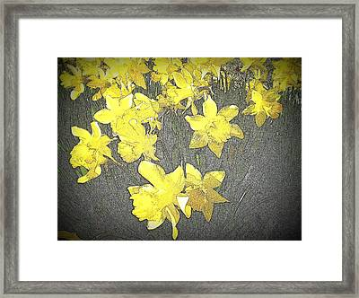 Daffodil 2-pencil Etch Framed Print by Nick Kloepping