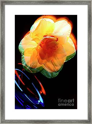 Daffodil And Game Of Colors. Framed Print by Alexander Vinogradov