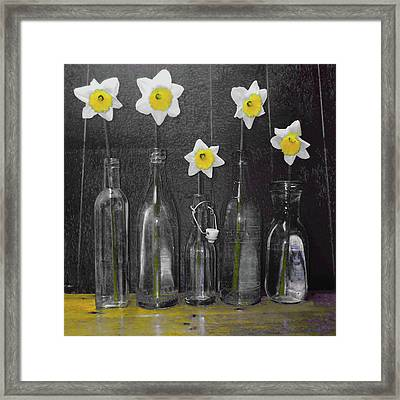 Daffodil Delight Framed Print by P Donovan