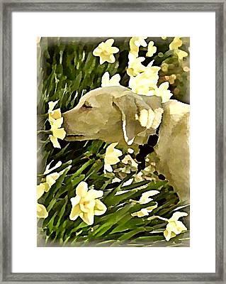 Daffodil Dog Framed Print