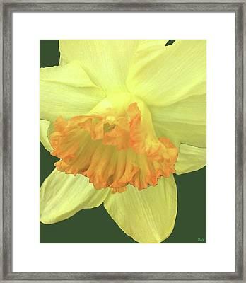 Daffodil Down Framed Print by Debra     Vatalaro