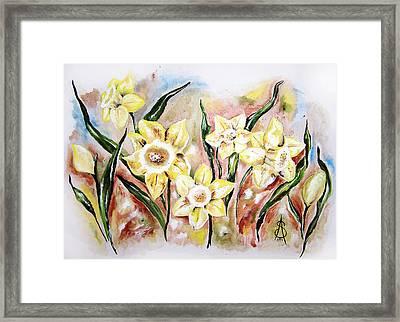 Daffodil Drama Framed Print by Amanda  Sanford